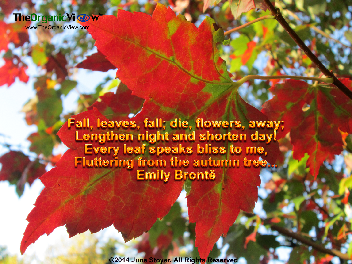 Fall Leaves Fall Die Flowers Away Lengthen Night And Shorten Day Fluttering From The Autumn Tree