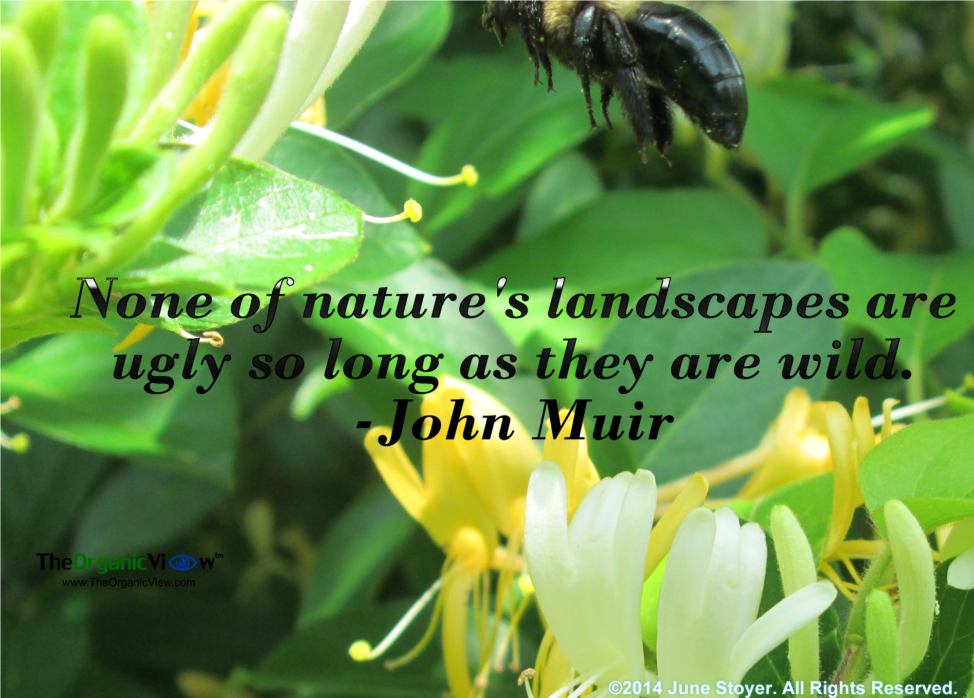 None Of Natures Landscapes Are Ugly So Long As They Are Wild John Muir