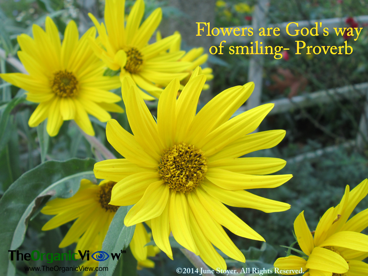 Flowers are gods way of smiling proverb view full size izmirmasajfo