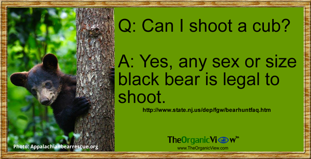 Can I shoot a cub?