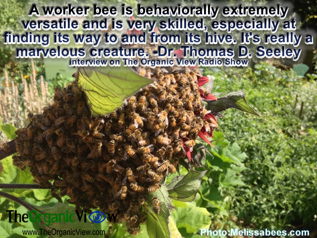 A worker bee is behaviorally extremely versatile and is very skilled, especially at finding its way to and from its hive