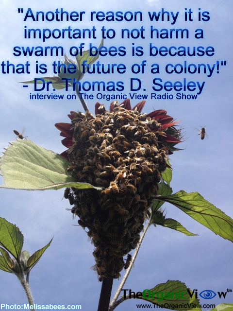 Another reason why it is important to not harm a swarm of bees is because that is the future of a colony Dr Thomas D Seeley