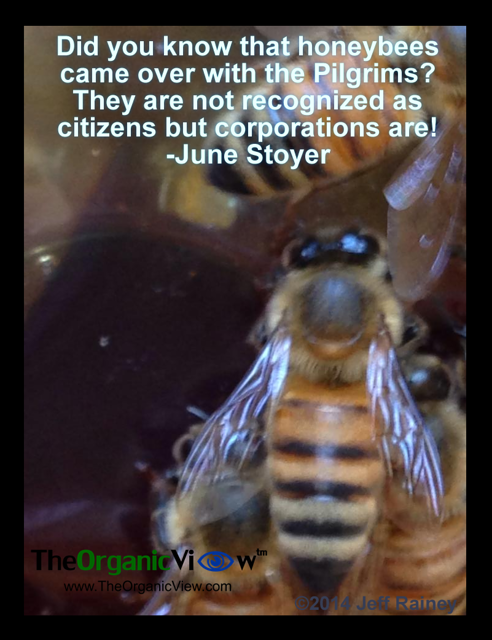 Did you know that honeybees came over with the Pilgrims? They are not recognized as citizens but corporations are! June Stoyer