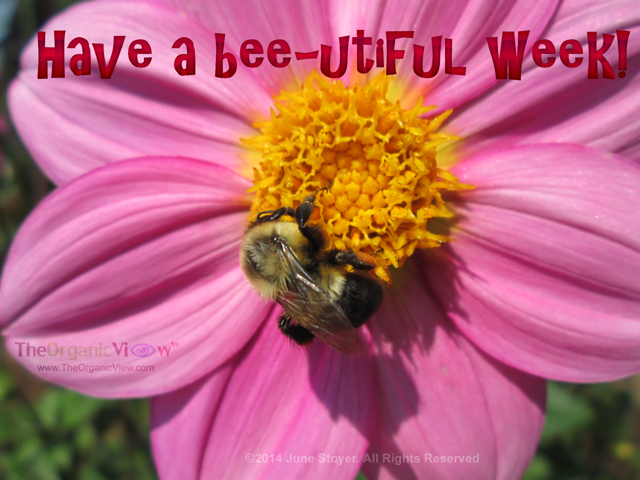 Have a bee-utiful week
