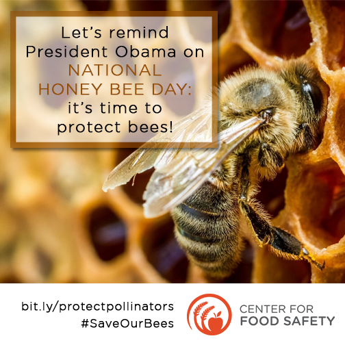 Let's remind Pres Obama on National Honeybee Day! It's time to protect bees!