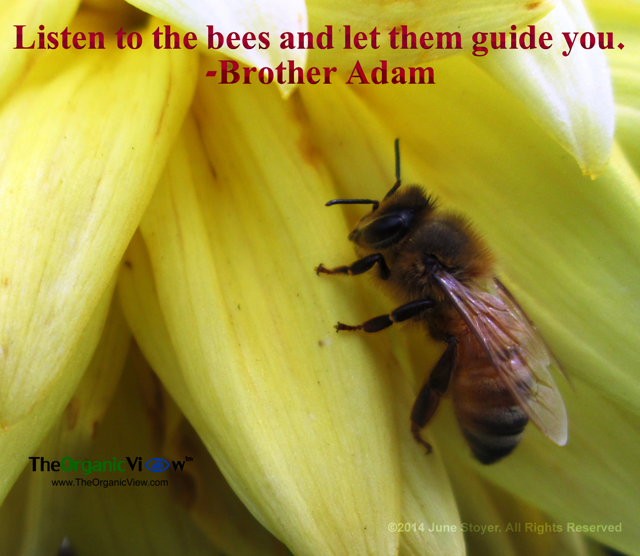 Listen to the bees and let them guide you. Brother Adam