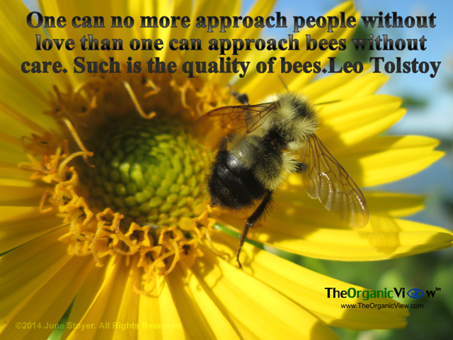 One can no more approach people without love than one can approach bees without care. Such is the quality of bees Leo Tolstoy