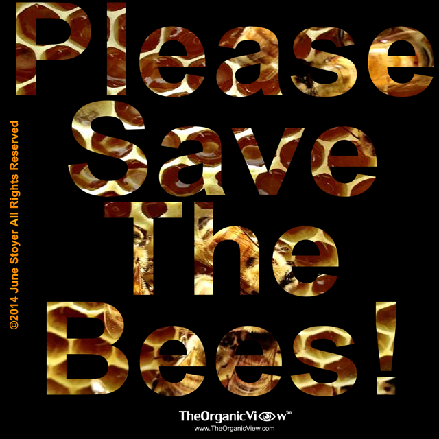 Please Save The Bees -June Stoyer