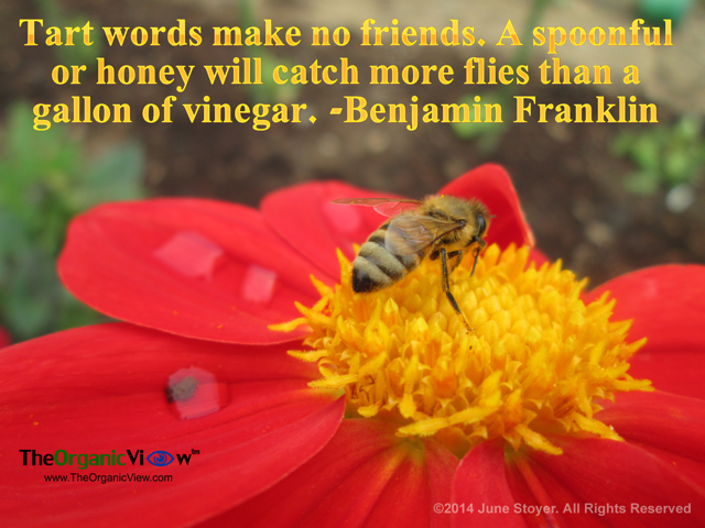Tart words make no friends. A spoonful or honey will catch more flies than a gallon of vinegar Benjamin Franklin