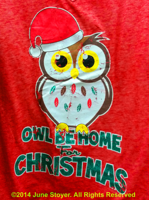 Owl Be Home For Christmas Photo By June Stoyer