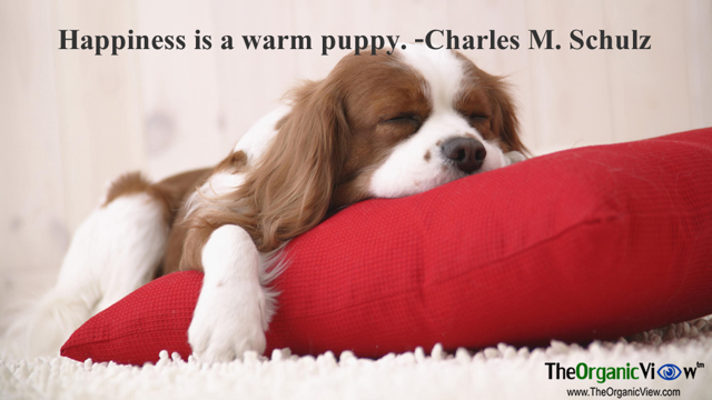 Happiness is a warm puppy Charles M Schulz