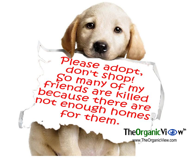 Please adopt, don't shop!