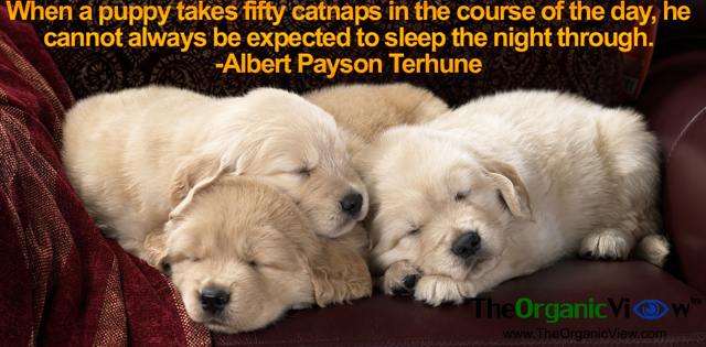 When a puppy takes fifty catnaps in the course of the day, he cannot always be expected to sleep the night through