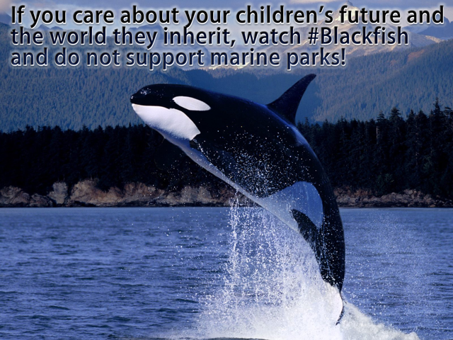 Watch Blackfish and do not support marine parks