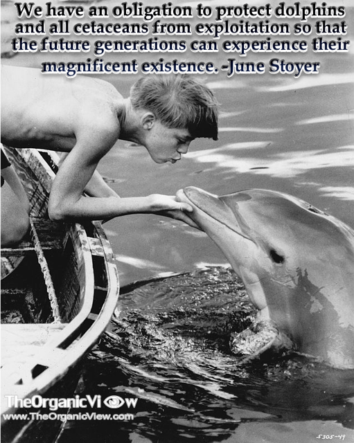 We have an obligation to protect dolphins and all cetaceans from exploitation so that the future generations can experience their magnificent existence June Stoyer