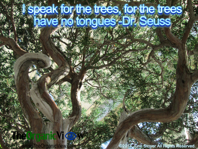 I speak for the trees, for the trees have no tongues Dr Seuss