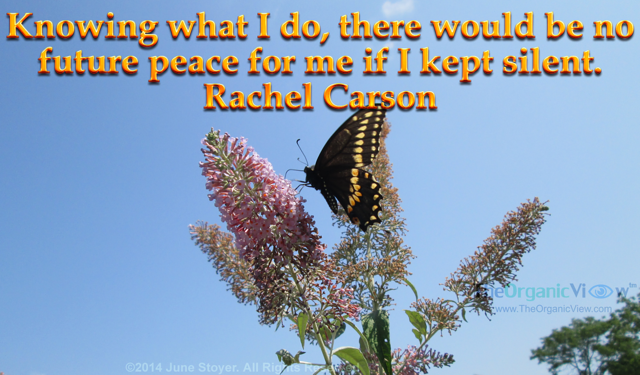 Knowing what I do, there would be no future peace for me if I kept silent. Rachel Carson