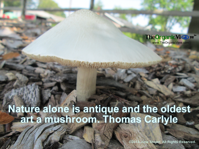 Nature alone is antique and the oldest art a mushroom. Thomas Carlyle