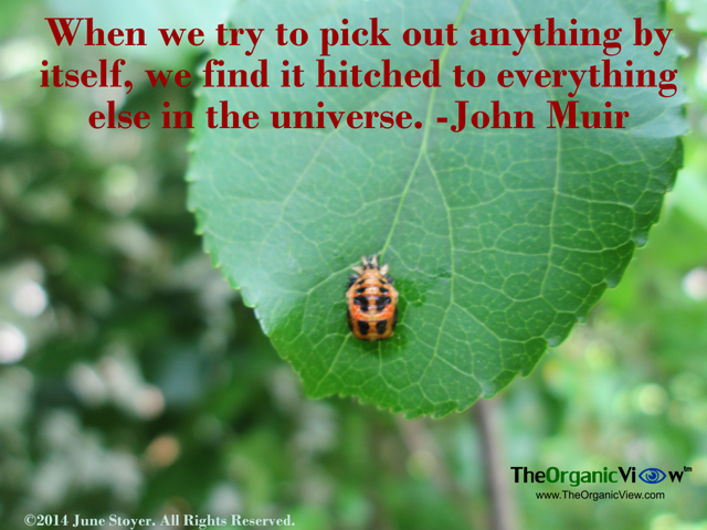 When we try to pick out anything by itself, we find it hitched to everything else in the universe John Muir