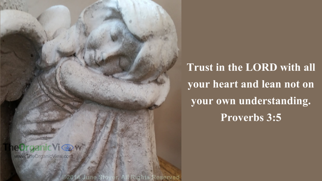 Trust in the LORD with all your heart and lean not on your own understanding. Proverbs 3:5