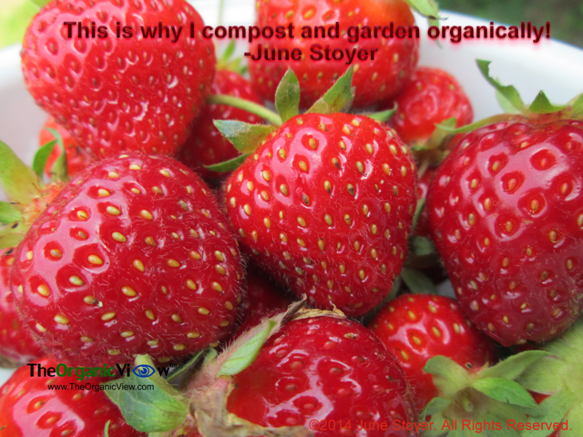 This is why I compost and garden organically- June Stoyer