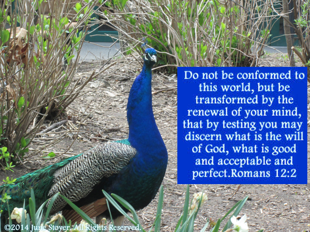 Do not be conformed to this world, but be transformed by the renewal of your mind Romans 12 2