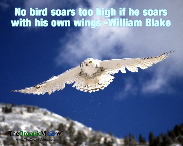 No bird soars too high if he soars with his own wings William Blake