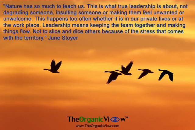 Nature has so much to teach us about leadership!