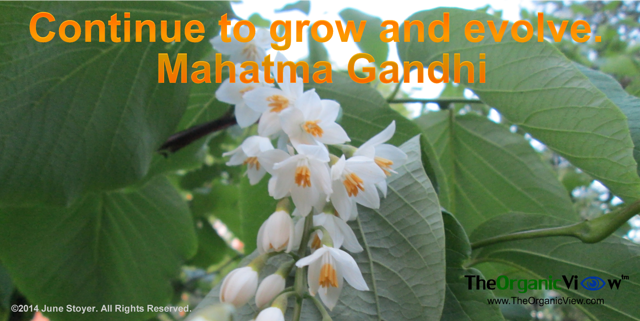 Continue to grow and evolve Mahatma Gandhi