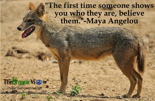 The first time someone shows you who they are, believe them Maya Angelou
