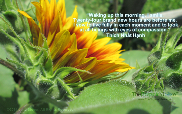 Waking up this morning, I smile. Twenty-four brand new hours are before me. I vow to live fully in each moment