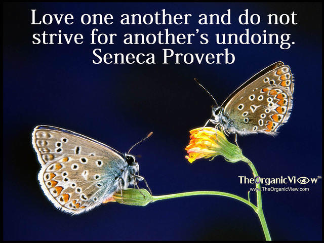 Love one another and do not strive for another's undoing. Seneca Proverb