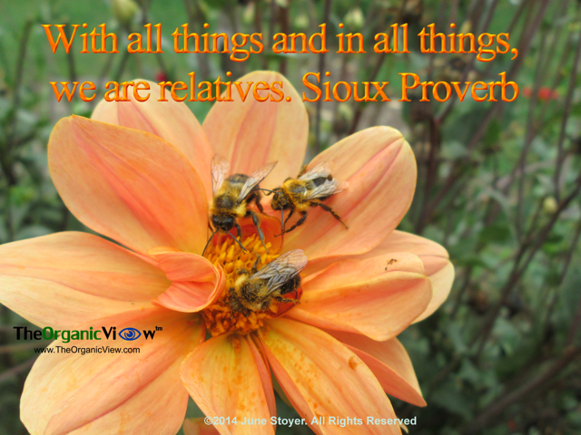 With all things and in all things, we are relatives. Sioux Proverb