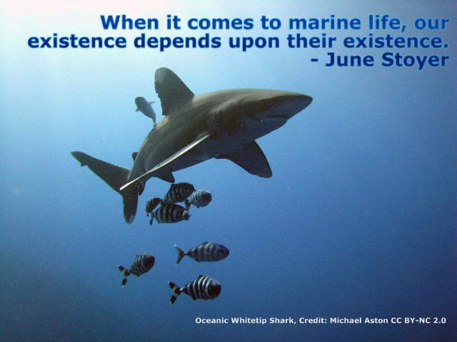 When it comes to marine life, our existence depends upon their existence.