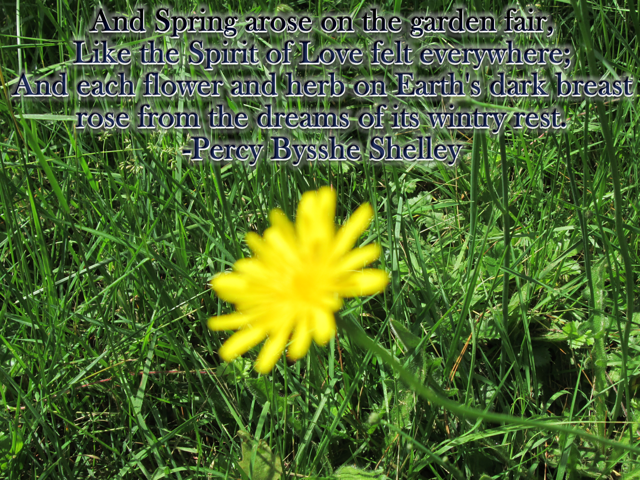And Spring arose on the garden fair-Percy Bysshe Shelley