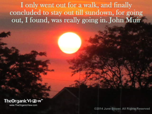 I only went out for a walk, and finally concluded to stay out till sundown, for going out, I found, was really going in. John Muir
