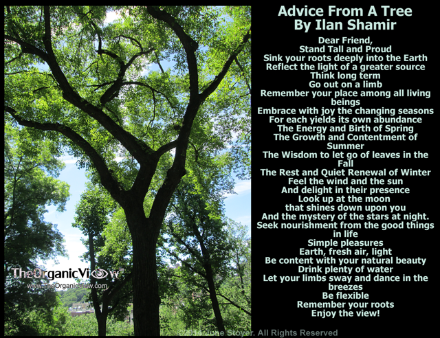 Advice From A Tree By Ilan Shamir