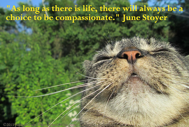 As long as there is life there will always be a choice to be compassionate - June Stoyer