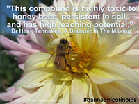 This compound is highly toxic to honey bees, persistent in soil, and has high leaching potential Dr Henk Tennekes