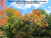 Heaven is under our feet as well as over our heads. Henry David Thoreau