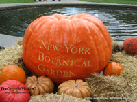 New York Botanical Garden Gigantic Pumpkin