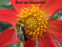 Bees are beautiful!