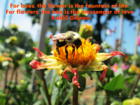 For bees, the flower is the fountain of life, For flowers, the bee is the messenger of love. Kahlil Gibran