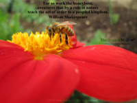 For so work the honeybees, creatures that by a rule in nature teach the act of order to a peopled kingdom. Shakespeare