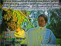 I have learned that these honeybees, when they are in a swarm, even though they can sting, they don't sting.- Dr. Thomas D. Seeley