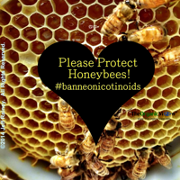 Please protect honeybees and ban neonicotinoids