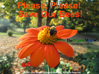 Please, Please! Save Our Bees!