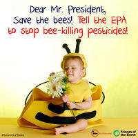 Save Our Bees!