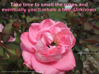 Take time to smell the roses and eventually you'll inhale a bee. Unknown