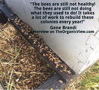 The bees are still not healthy! The bees are still not doing what they used to do. Gene Brandi